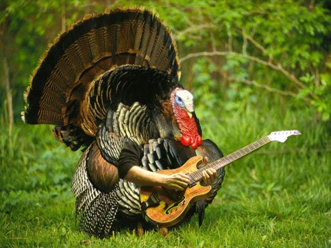 turkerguitar